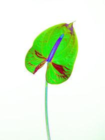 Abstract Anthurium-15 von David Toase