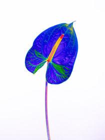 Abstract Anthurium-18 von David Toase
