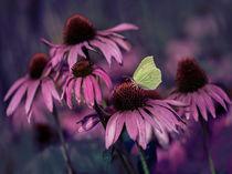 Purple echinacea flowers von Jarek Blaminsky
