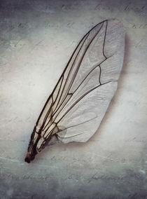 Broken wing by Jarek Blaminsky