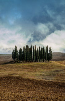 Toscanian cypresses by Jarek Blaminsky