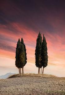 Cypresses of Toscany von Jarek Blaminsky