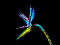Abstract Bird of Paradise Flower-07 von David Toase