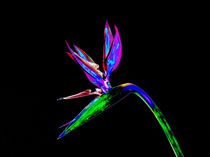 Abstract Bird of Paradise Flower-09 by David Toase