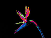 Abstract Bird of Paradise Flower-12 von David Toase