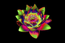 Abstract Water Lily-01 von David Toase