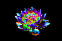 Abstract Water Lily-03 von David Toase