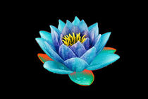 Abstract Water Lily-05 von David Toase