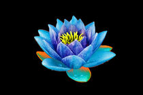 Abstract Water Lily-09 von David Toase