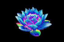 Abstract Water Lily-12 von David Toase