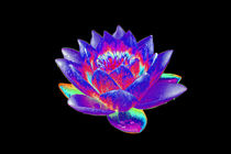 Abstract Water Lily-13 von David Toase