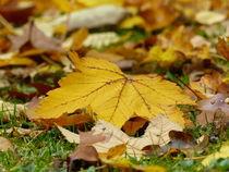 Herbstlaub-2 by maja-310