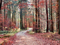 Roter Herbst by Christian Mueller