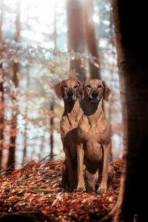 Mutter und Tochter von Anja Foto Grafia