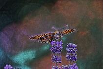 Butterfly by Carmen Wolters