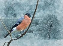 Gimpel im Winter by garrulus-glandarius