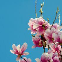 Frühlings Erwachen  von Reiner Poser