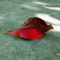 Herbstlaub-3 by maja-310