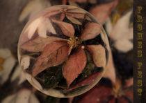 In der Glaskugel - Weihnachtsstern mit Christrose von Chris Berger