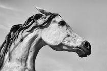 Arizona Horse von Elisabeth  Lucas