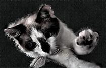 Snowshoe Kitten by Elisabeth  Lucas
