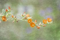 Spring Mallow von Elisabeth  Lucas