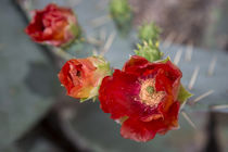 Pretty in Red by Elisabeth  Lucas