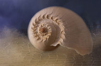 Harber Sea Shell von Elisabeth  Lucas