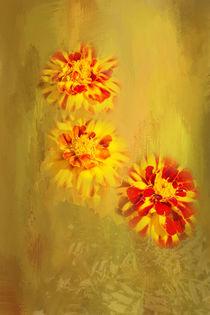 Pretty Marigolds von Elisabeth  Lucas