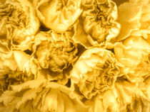 Yellow Carnations by Elisabeth  Lucas