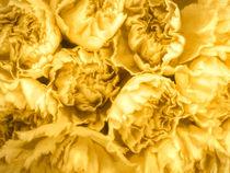Yellow Carnations von Elisabeth  Lucas