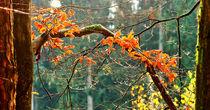 Herbstimpression by Eberhard Schmidt-Dranske