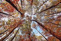 Goldener Herbst by Eberhard Schmidt-Dranske