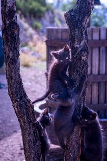 Tree Climb von Sean Langton
