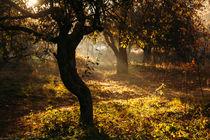 Autumn apple orchard  by Dmitry Gavrikov