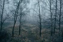 Early foggy morning von Dmitry Gavrikov