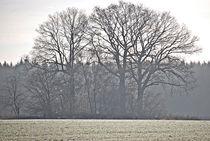 silent day... 7 von loewenherz-artwork