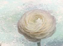 Snow White Ranunculus von Elisabeth  Lucas