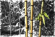Bambus by mario-s