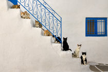 Cats on a stairway in Greek by Katho Menden