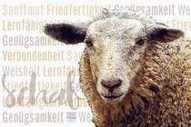 Schaf - Sanftmut im Wollpaket von Astrid Ryzek