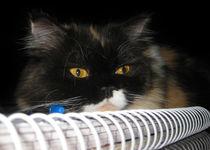 Cat Wanna Study von Looly Elzayat