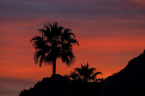 Red Palm Sunset by Elisabeth  Lucas