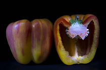Striped Peppers by Elisabeth  Lucas