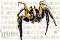 Spinne - im Netz des Lebens von Astrid Ryzek