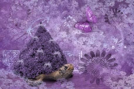 Purple-and-turtle