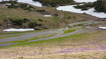 Wet road to the glacial lake  by Enache Armand Iustinian