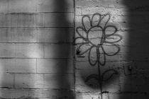 Flower in Alley by Jim Corwin