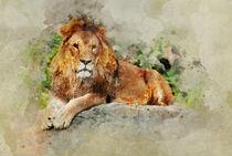 Male Lion by Jarek Blaminsky