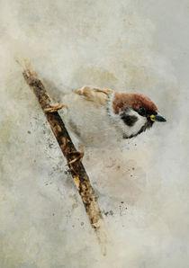 Small sparrow on the branch by Jarek Blaminsky